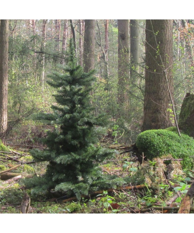 Basic Tree Warm Bordeaux 180cm-83