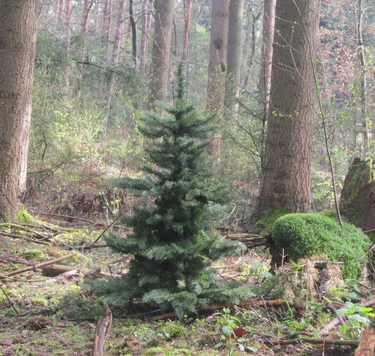 Arbre de Noël Vert rafraîchissant 180cm-1965